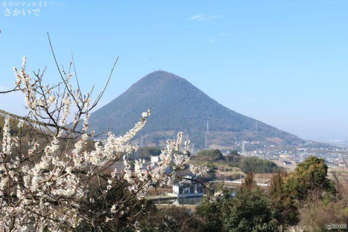 この画像には alt 属性が指定されておらず、ファイル名は mt-iinoyama-plum01-700x467.jpg です